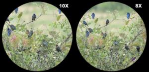 Binocular magnification