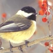 Optics for Bird Watching